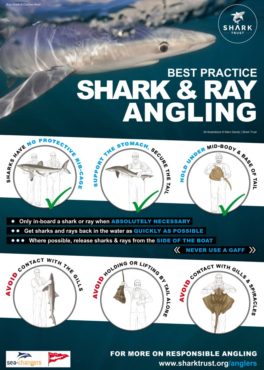 Shark Angling Project